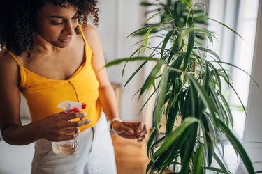 Misting plants at home