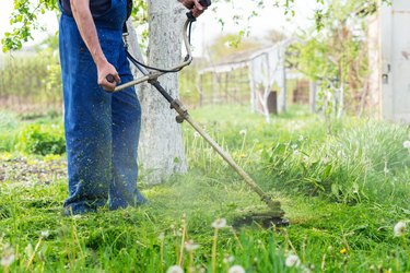 The gardener mows the grass with a trimmer in the spring garden