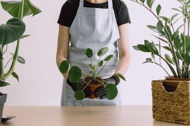 Woman gardener holding ceramic pot with plant