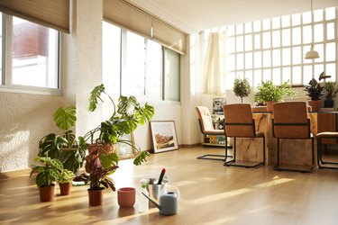 Potted Plants In Living Room