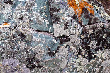 Moss and lichen growing on grey rock. Natural texture background with bright colorful vegetation on stone.
