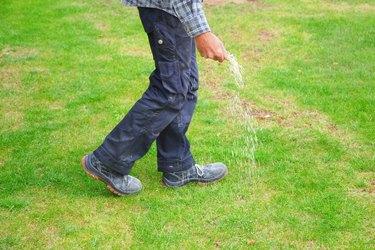 one man farmer is fertilizing the lawn soil. male hand of worker, Fertilizer For Lawns in springtime for the perfect lawn. lawn fertilizer in man's hand on garden background.