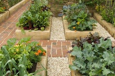 Raised beds in potager garden