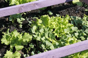 Close up on a small organic vegetable garden