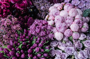Stunning gradient of fresh blossoming flowers  from dark purple to pastel lavender colors. Top view of flowers at the florist shop: peonies, roses, tulips, carnations, ranunculus, flat lay
