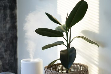 Air humidifier machine with air purifier tree with light from window