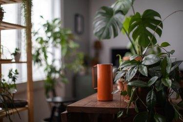 Watering houseplant, indoor gardening concept