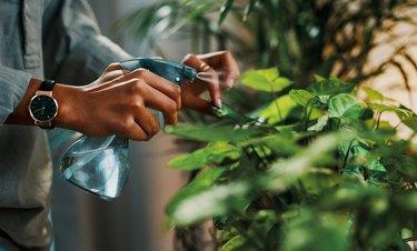 Tending to her greenery