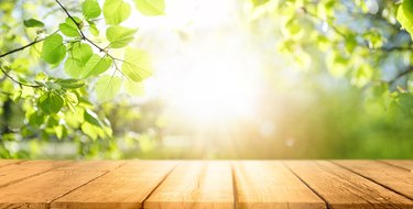Spring beautiful background with green juicy young foliage and empty wooden table in nature outdoor.