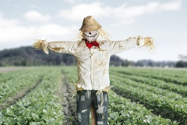 Scarecrow protecting vegetable farm crop
