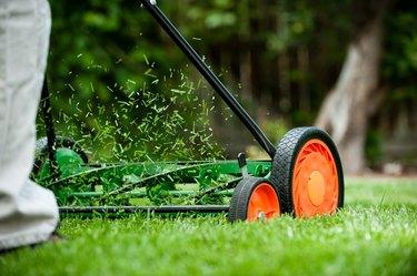 Rotary push mower with orange wheels cutting the grass