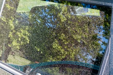 Pollen on window