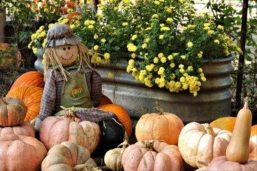 Scarecrow Sitting on Pumpkins at Pumpkin Patch