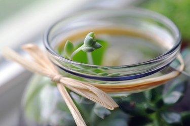 Tiny succulent in glass jar