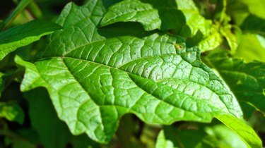 healthy vivid generic green leaf with detailed texture