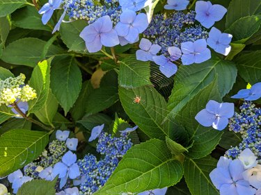 Close up of a spider web woven around light blue flowers