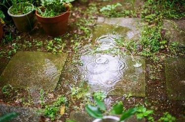 rain drops leaving rings on the water in garden