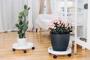 T4U white plan dolly planter caddies with wheels