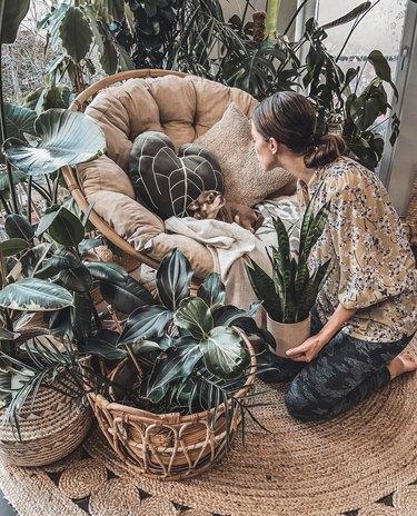 houseplantfairy