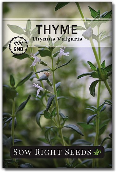Thyme flowers attract butterflies.