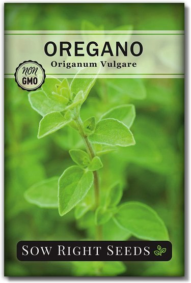Oregano is easy to start from seed.
