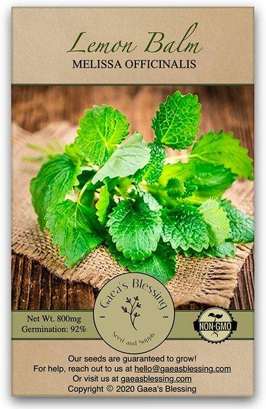 Lemon balm is a vigorous spreading herb.