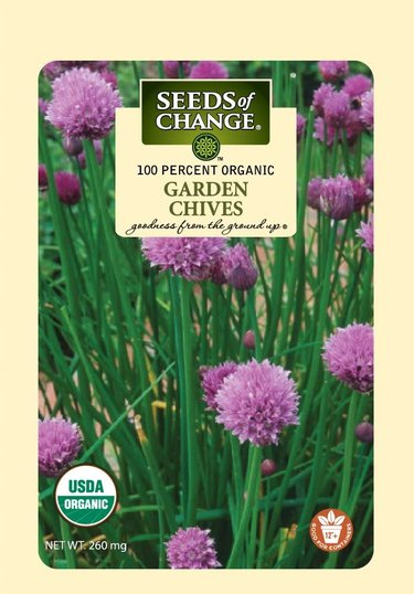 Garden chives have purple flowers.
