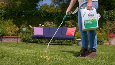spraying Roundup® For Lawns 1 Ready-to-Use  on dandelions in yard