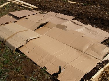 Cardboard laid out on the ground to mark the site of a new garden bed.
