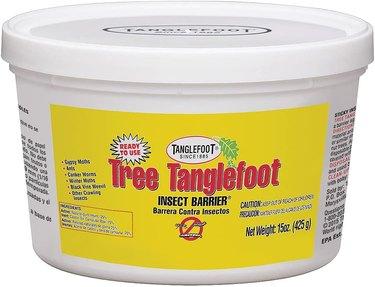 Tree Tanglefoot traps earwigs