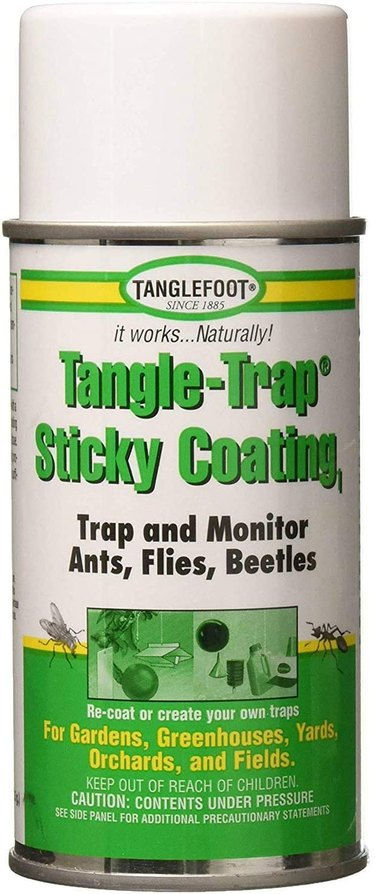 Spray a sticky coating on your DIY insect barrier to trap adult weevils.