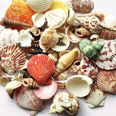Sea Shells DIY Kit
