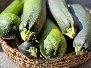 basket full of huge zucchini
