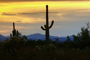 Sonoran Desert Sunset with Saquaro Cactus