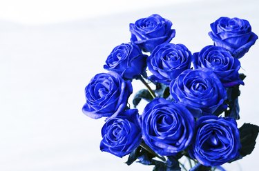 Blue roses