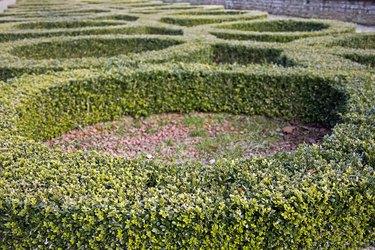 Box Hedge Circles