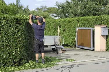 Clipping a hedge, gardening
