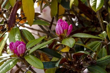 Various Blooming Trees at Rhododendron Farm