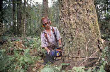 Logger Chainsawing a Tree