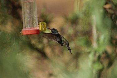 Hummingbird at birdfeeder