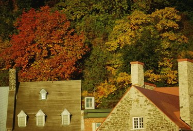 Roofs of houses by autumn trees
