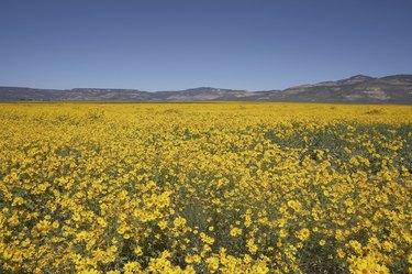 New Mexico wildflowers