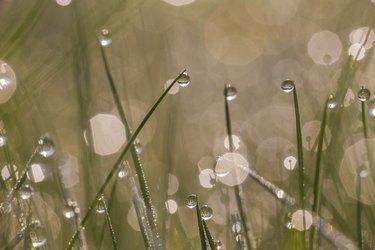 Fresh morning dew on spring grass