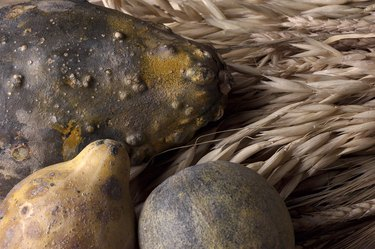 Close-up of gourds and wheat