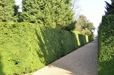 Hedge and pathway