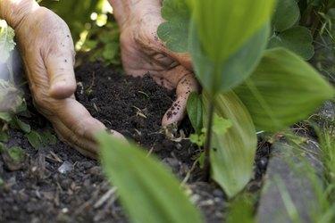 Female gardener working in garden
