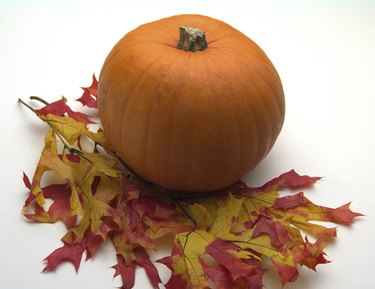 Vibrant leaves and pumpkin