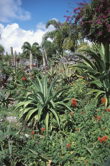 Blooming plants in tropical forest
