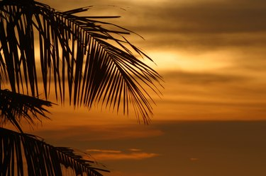 Tropical palm tree and ocean