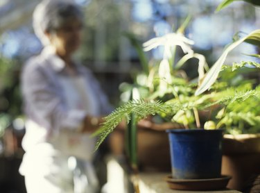 Pot plants in greenhouse, close up, woman in background